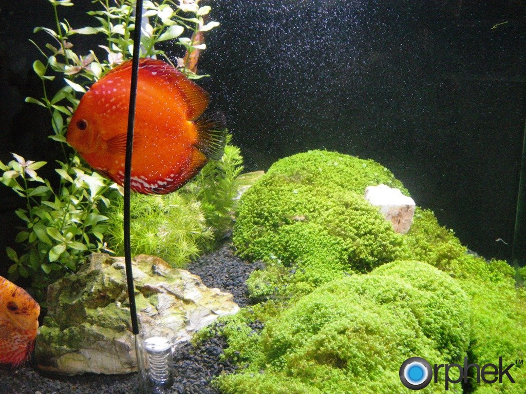 Acuario Plantado con Orphek Led Lighting PR72 Plantado