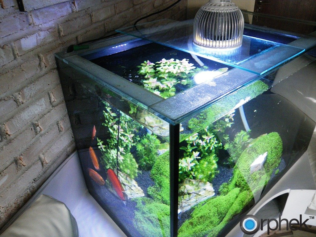 ditemokake aquarium LED lighting
