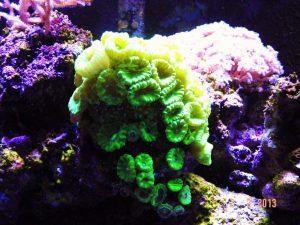 hô huỳnh quang màu xanh lá cây