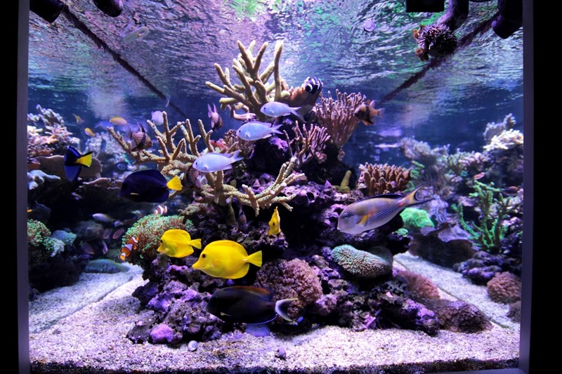 orphek reef aquarium LED
