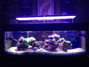 led-aquarium lighting-orphek-pr156