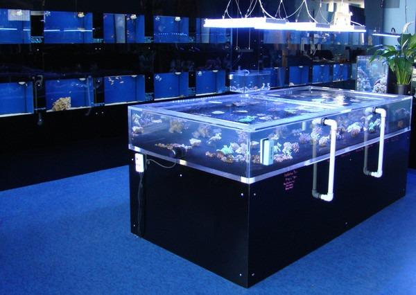 wie k nnen sie ihre koralle zur led beleuchtung f hren aquarium led beleuchtung orphek. Black Bedroom Furniture Sets. Home Design Ideas