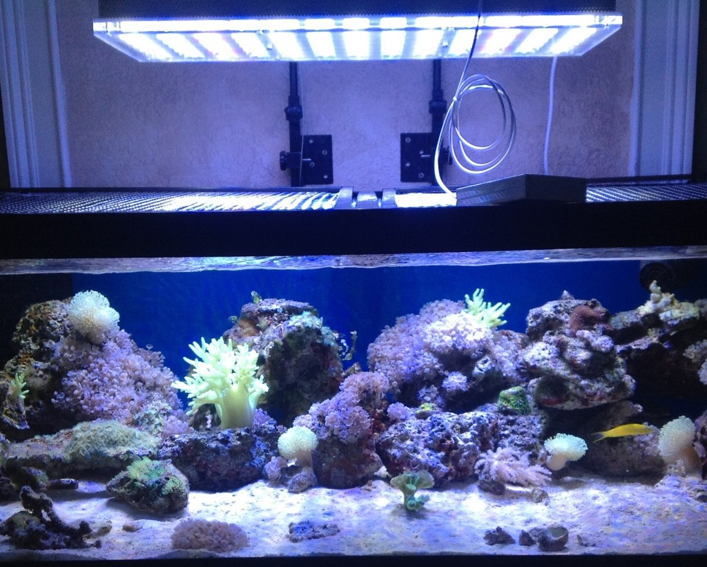 Jennifers Atlantik med linse 1024x821 48 inches reef akvarium i Florida