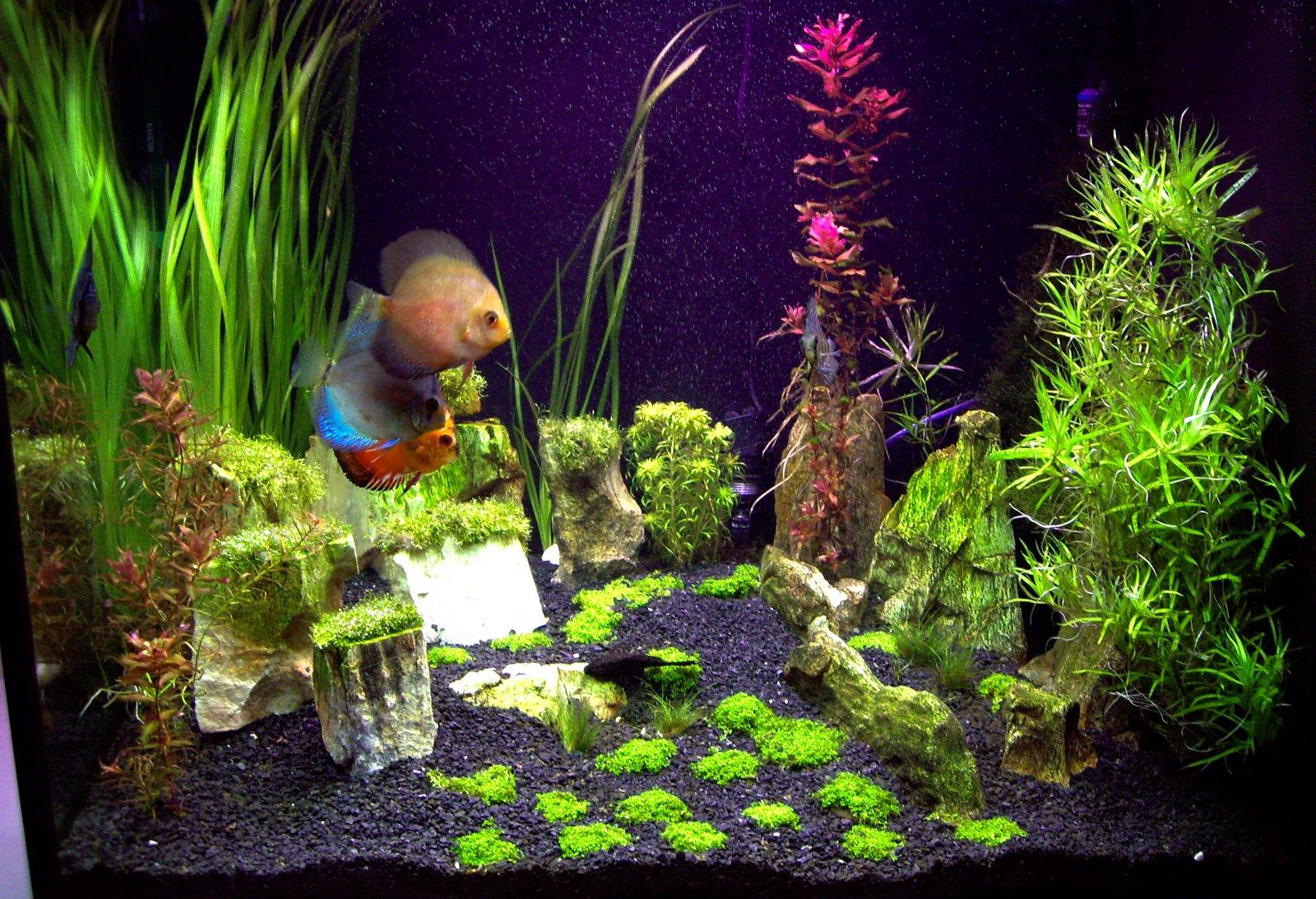 Freshwater fish kauai - Tropical Freshwater Aquarium Fish From A To Z