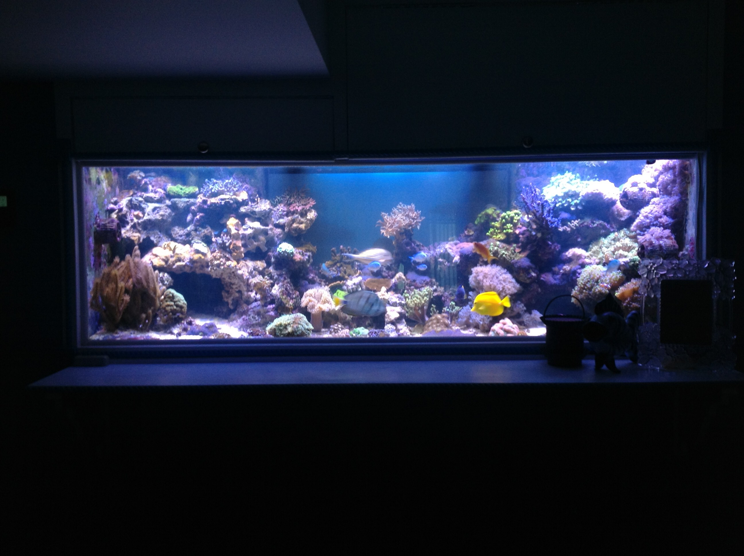 orphek led review aquarium led belysning. Black Bedroom Furniture Sets. Home Design Ideas