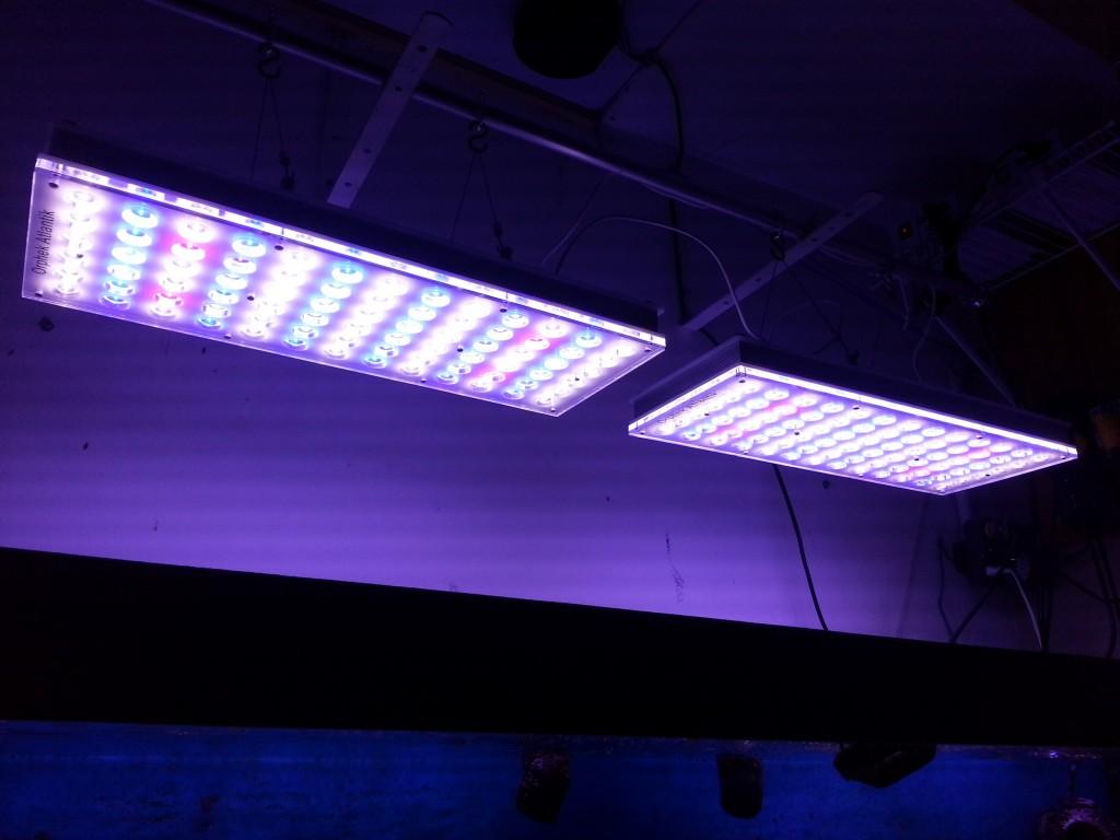 ORPHEK ATLANTIK LEDS são projetados especificamente para o cultivo de CORAIS