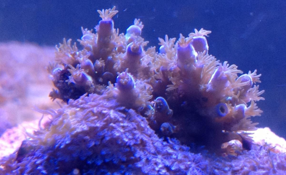 led leuchten review des kunden orphek led review orphek aquarium led beleuchtung. Black Bedroom Furniture Sets. Home Design Ideas