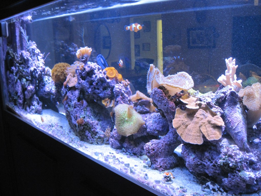 aquarium with orphek pr72 red led