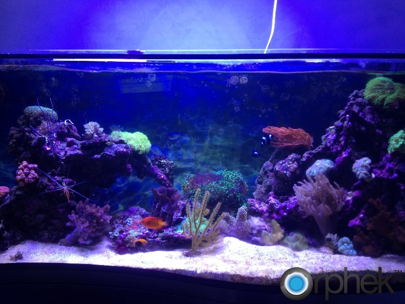 Aquarium Lights Related Keywords & Suggestions - Led Aquarium Lights ...