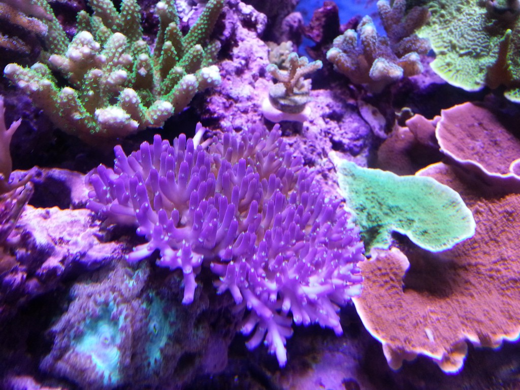 led lighting for corals