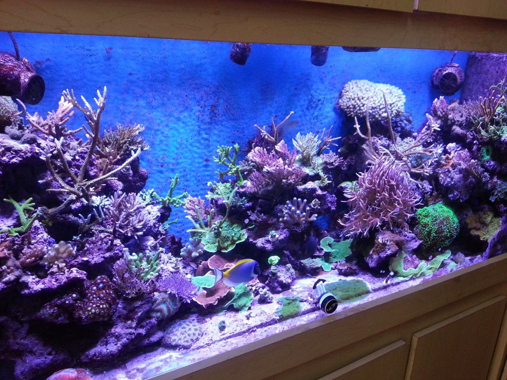 reef tank with orphek led lighting