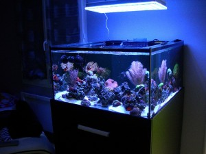 Atlantik + liwat + Nicolas 76 gallon reef aquarium