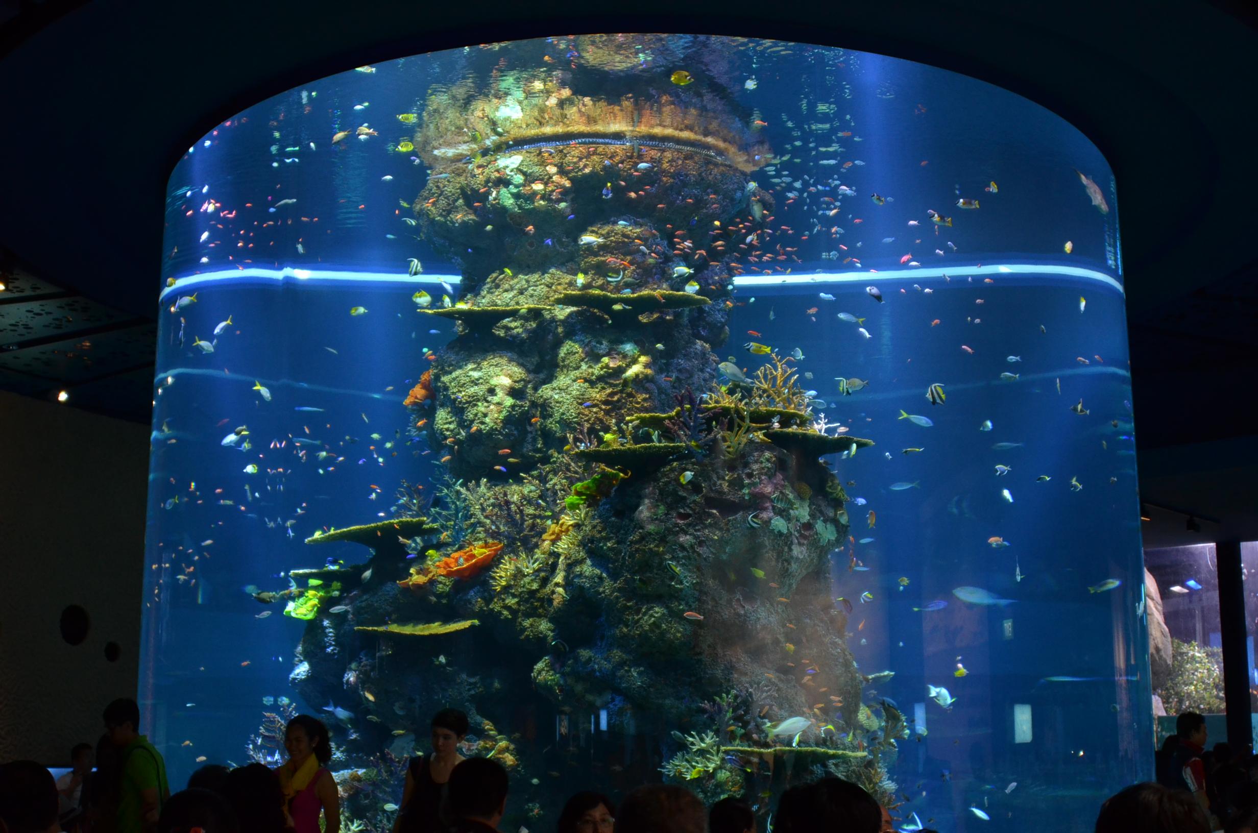 LED-Lighting-for-Public-Aquarium Stilvolle Bilder Mit Led Beleuchtung Dekorationen