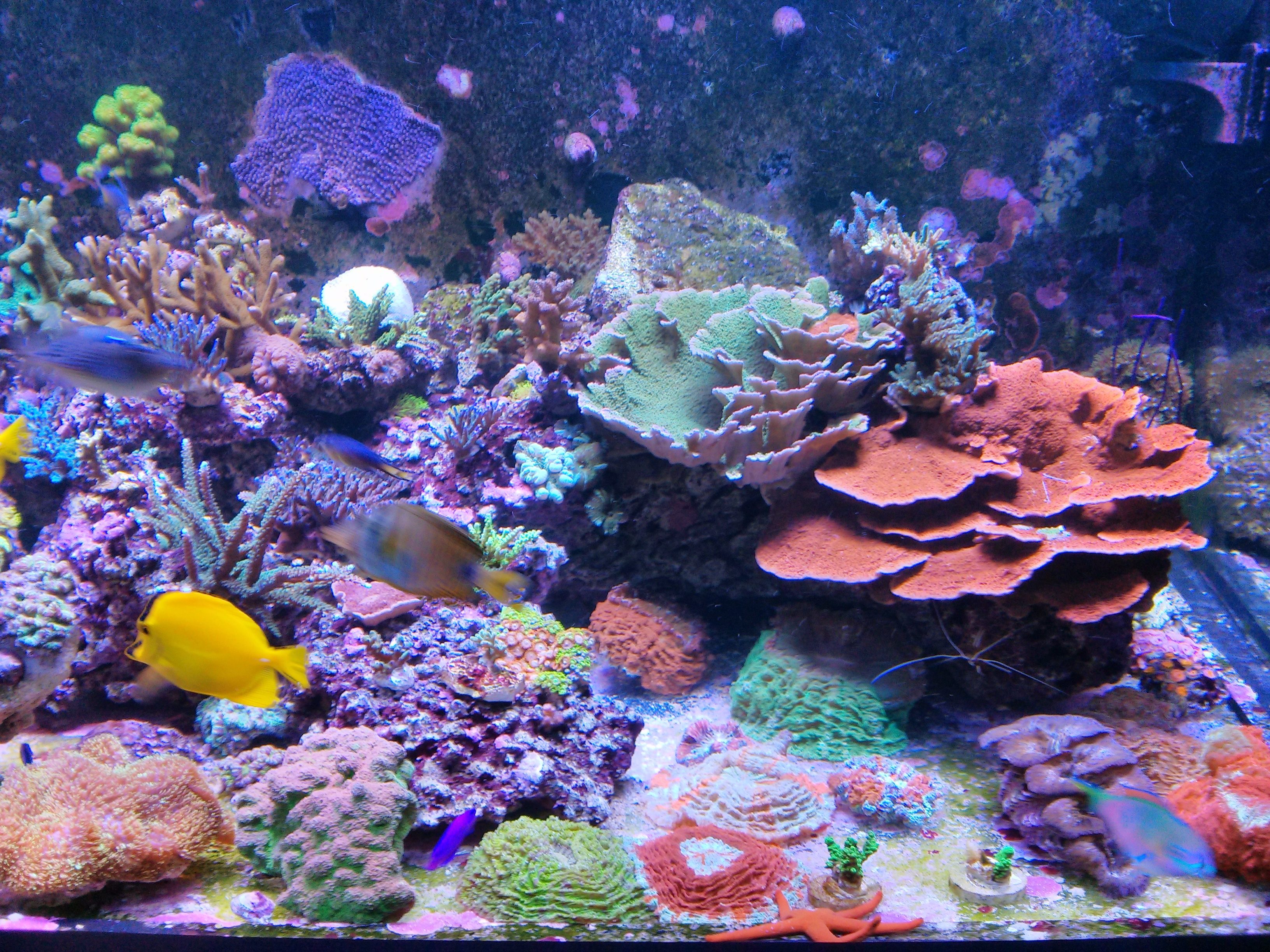 Coral growth over a four year span orphek for Reef fish tank