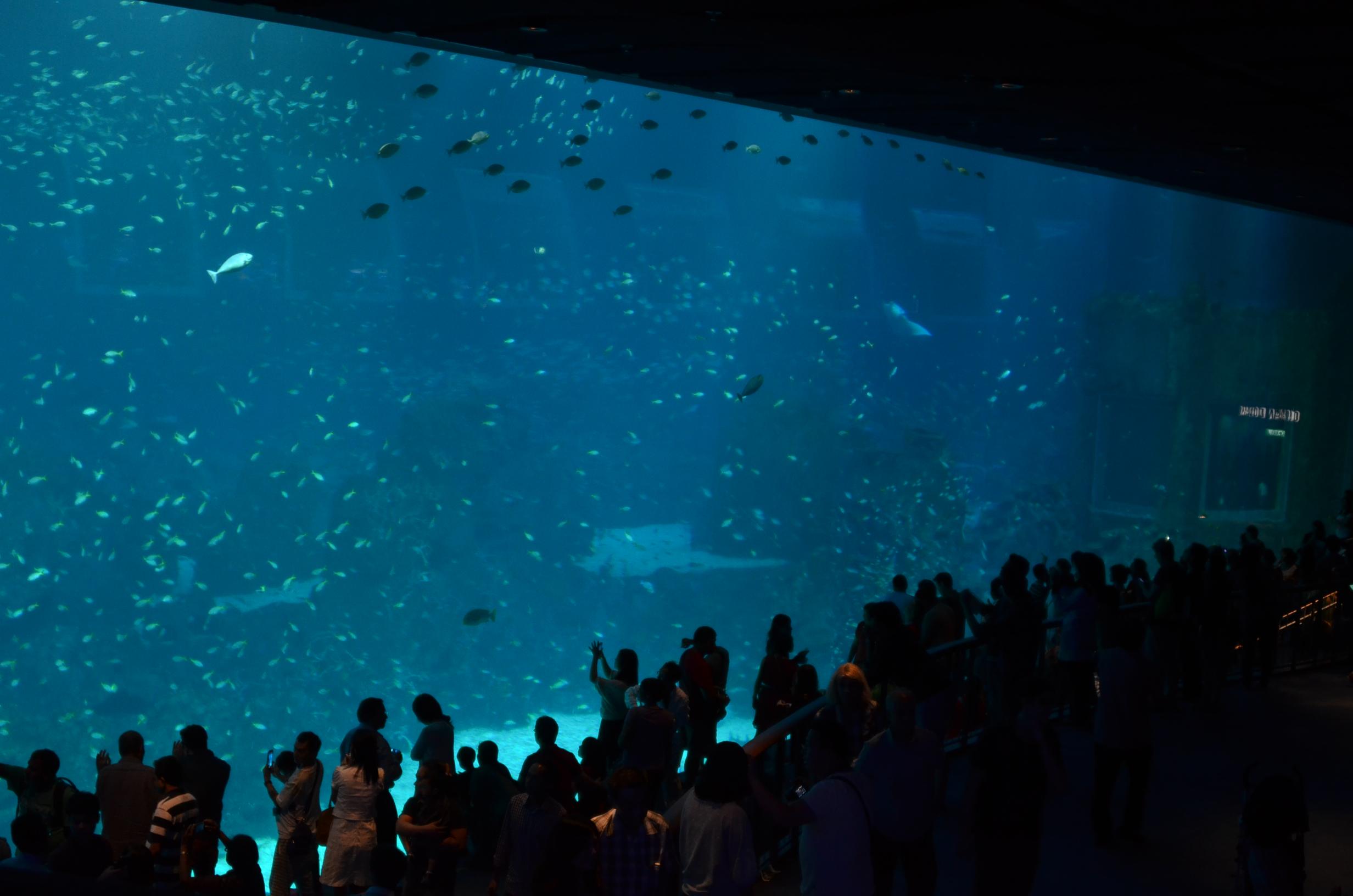grootste aquarium ter wereld