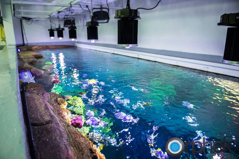 Dubai Burj Al Arab Hotel Aquarium - Orphek DIF-100 LED Light