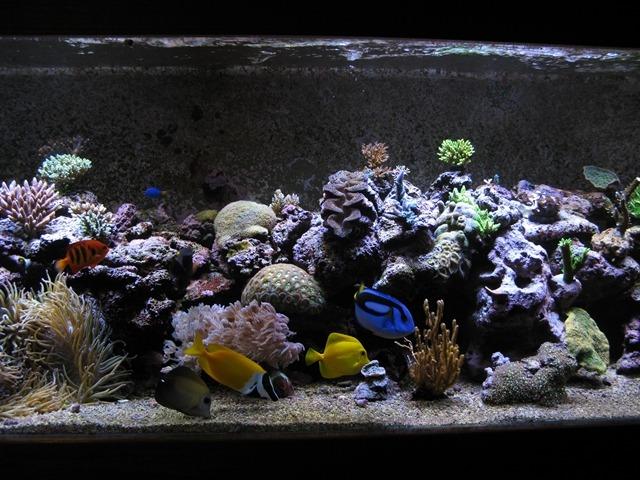 Orphek atlantik portato recensione di mauro da australia for Comprare un acquario