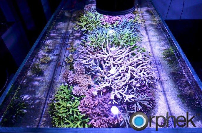 Reef Aquarium Lighting Aquarium Led Lights For Reef
