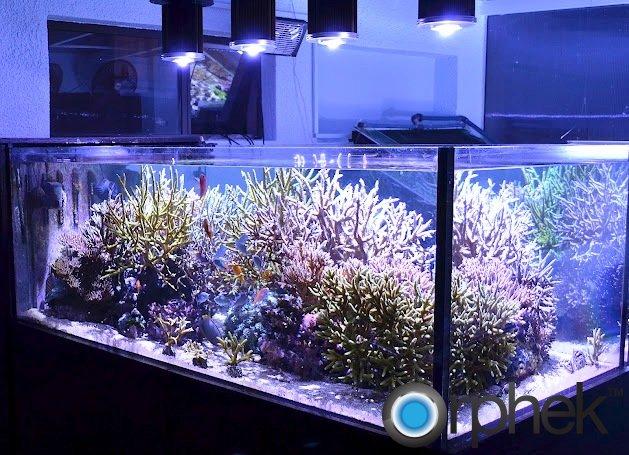 Projet 600 litres Jaubert débutant - Page 3 Best-led-for-corals