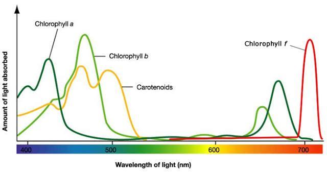 Chlorophyll-spectrum