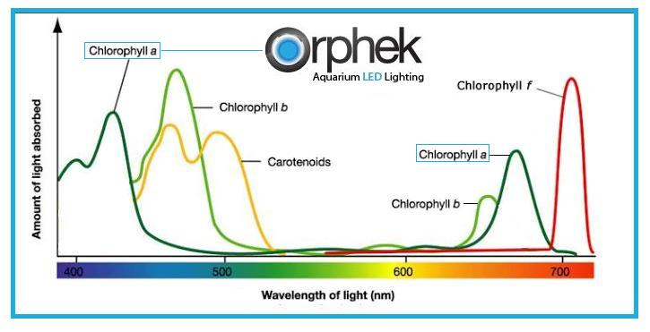 Chlorophyll a spectrum corals