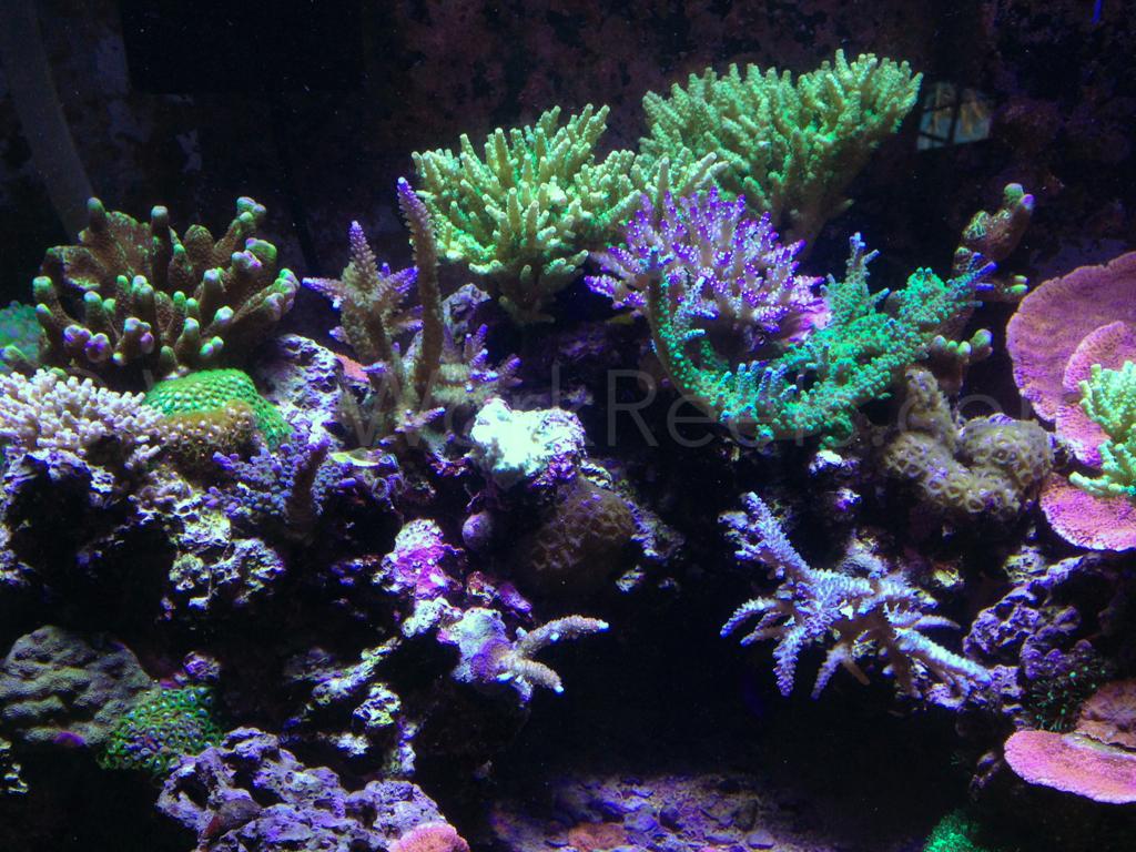 LED Aquarium Lighting Blog Orphek: Reef 57 by Wet Work