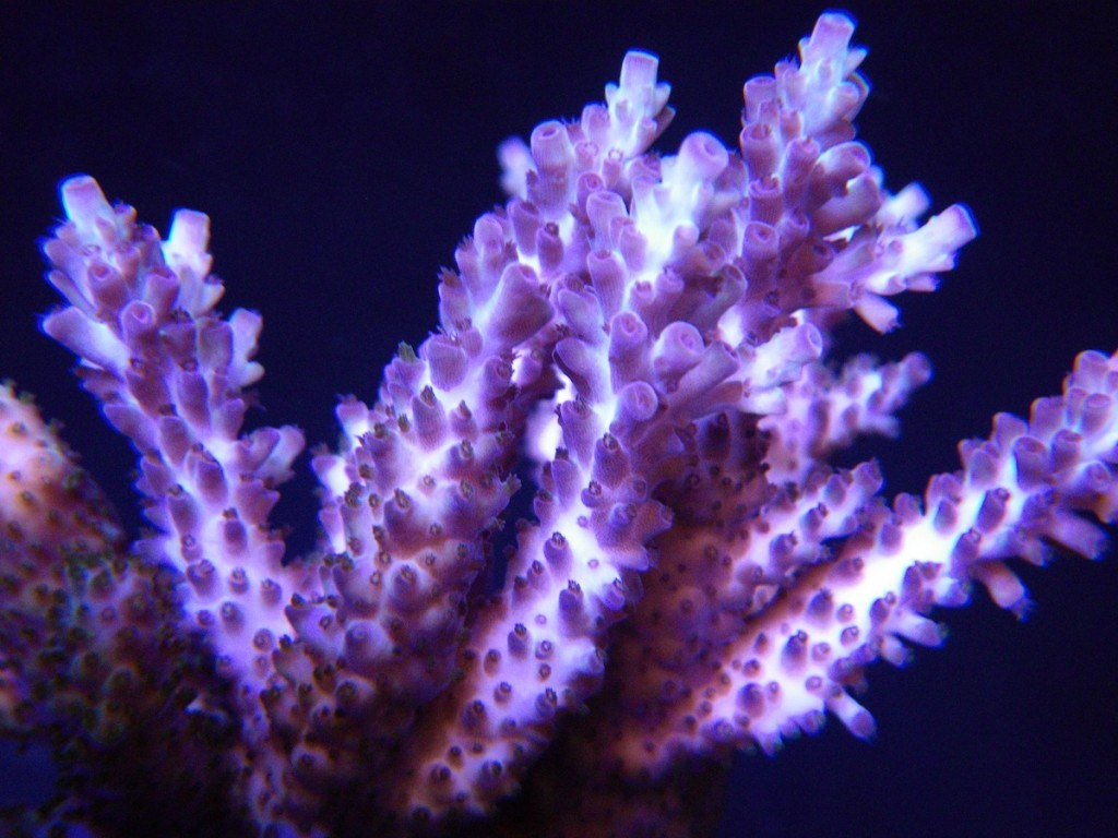 Corals Aquarium LED light