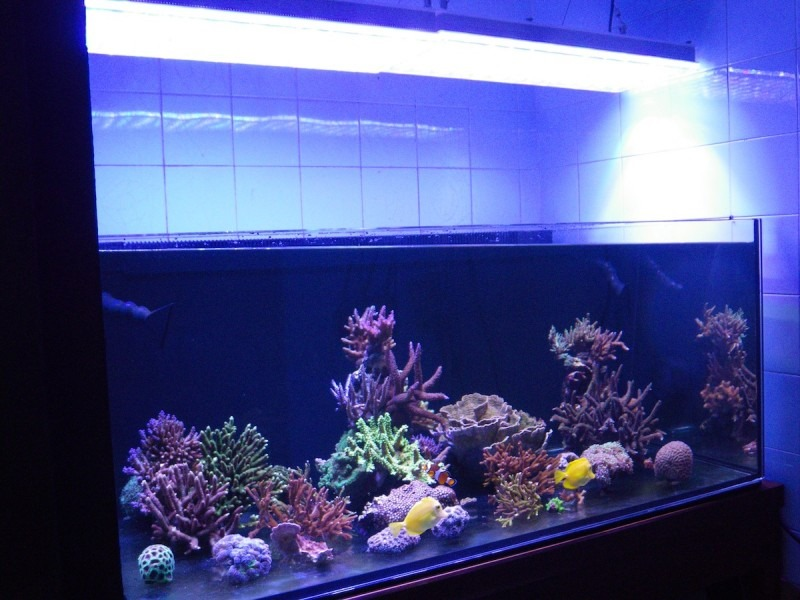 SUCCESSFUL REEF TANK
