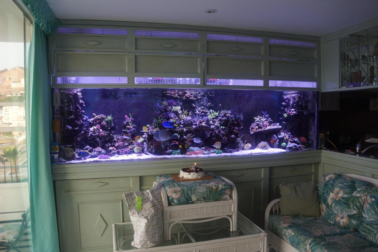 erster jahrestag der tankinstallation aquarium led beleuchtung orphek. Black Bedroom Furniture Sets. Home Design Ideas