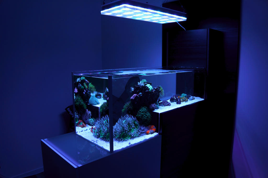 New Store In Sweden Now Selling Orphek Products Aquarium