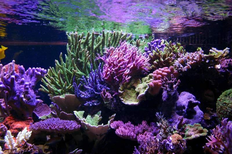 Tanne_Hoff _aquarium