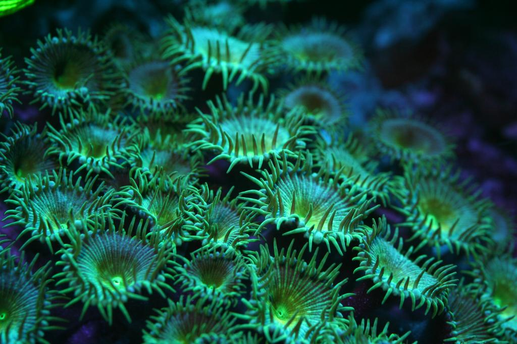 coral_photo_Orphek_Azurelite