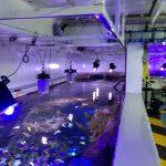 public_aquarium_light