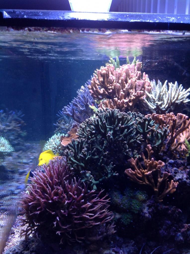 Atlantik_V2B_Led_Aquarium