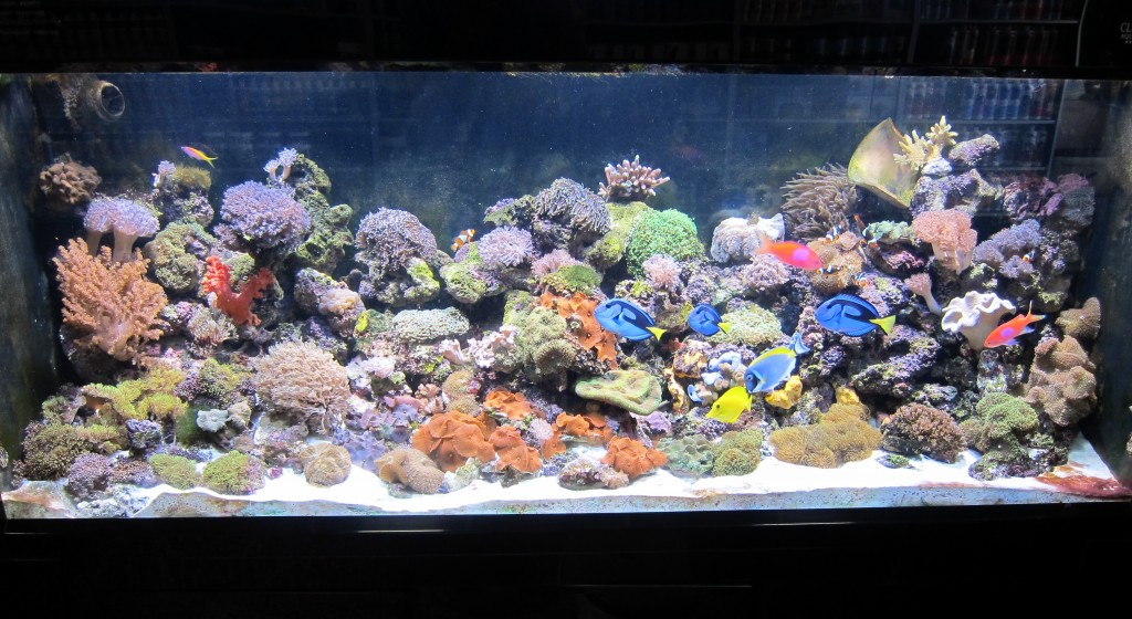 IRAN_ AQUARIUM_led_lighting