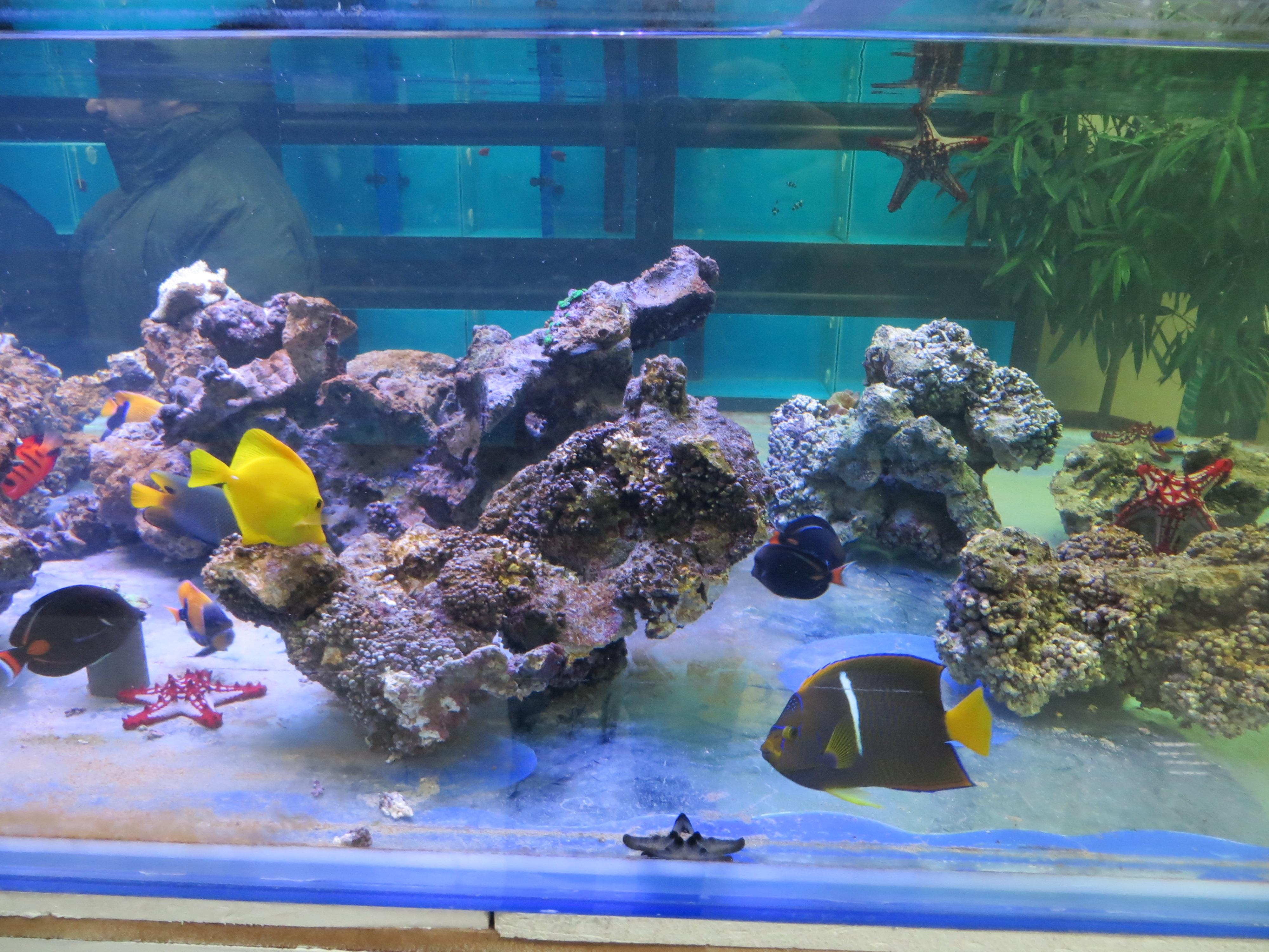 Aquarium buy iran aquarium orphek for Order aquarium fish online