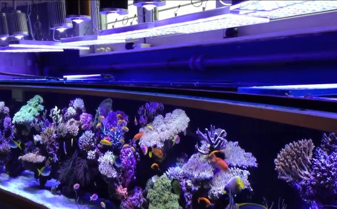 Pieters 6 meter reef akvarium