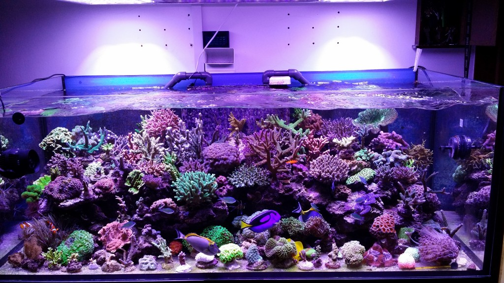 -Lights Aquarium-LED