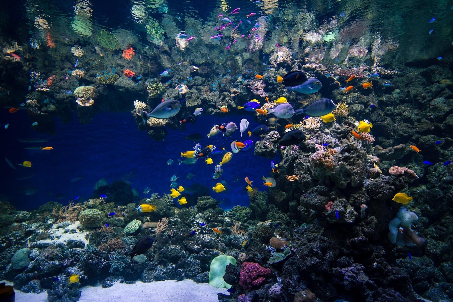Akuarium Awam Coral Reef