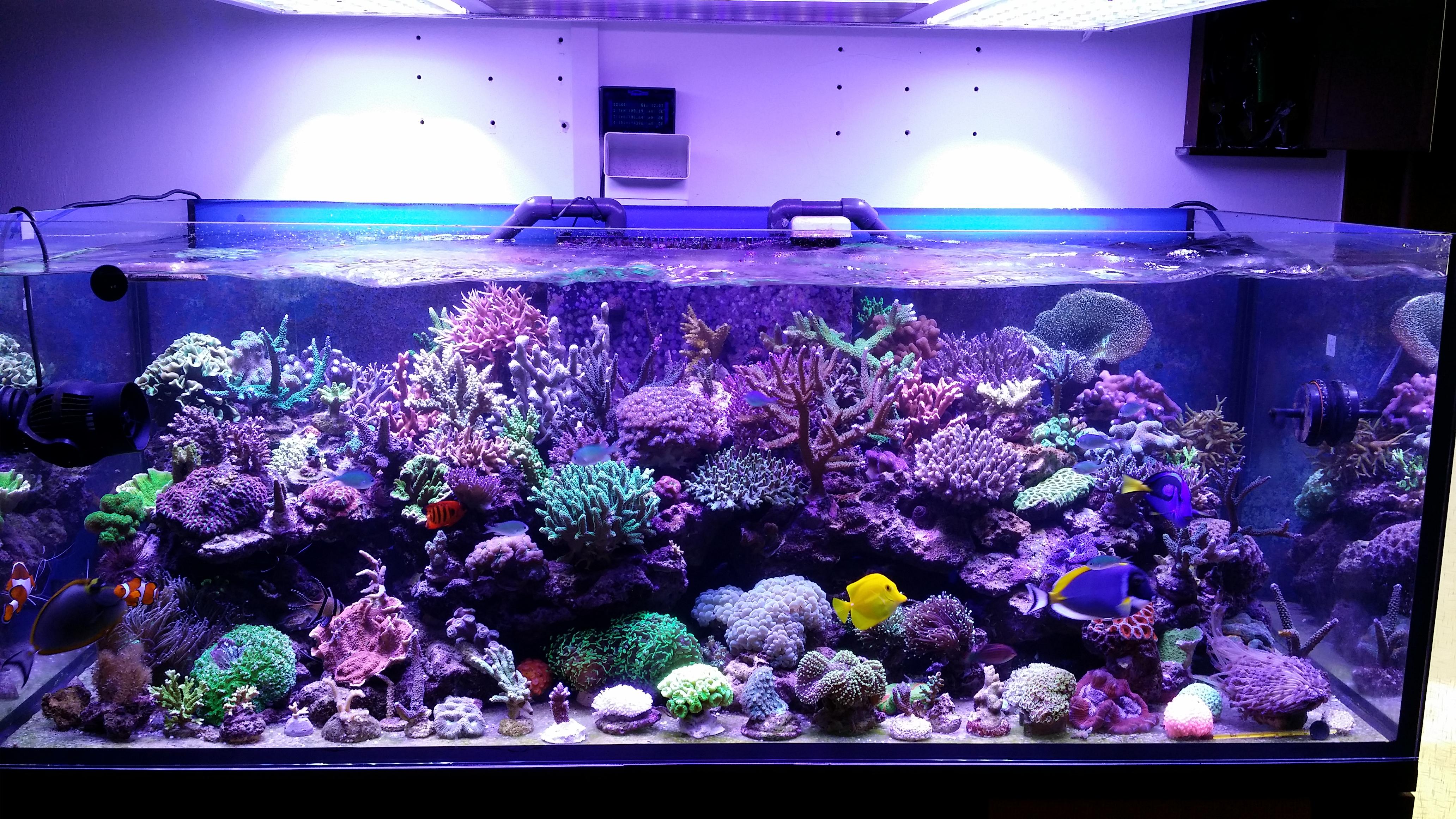 deze tank is echt een mooie aquarium led verlichting orphek. Black Bedroom Furniture Sets. Home Design Ideas