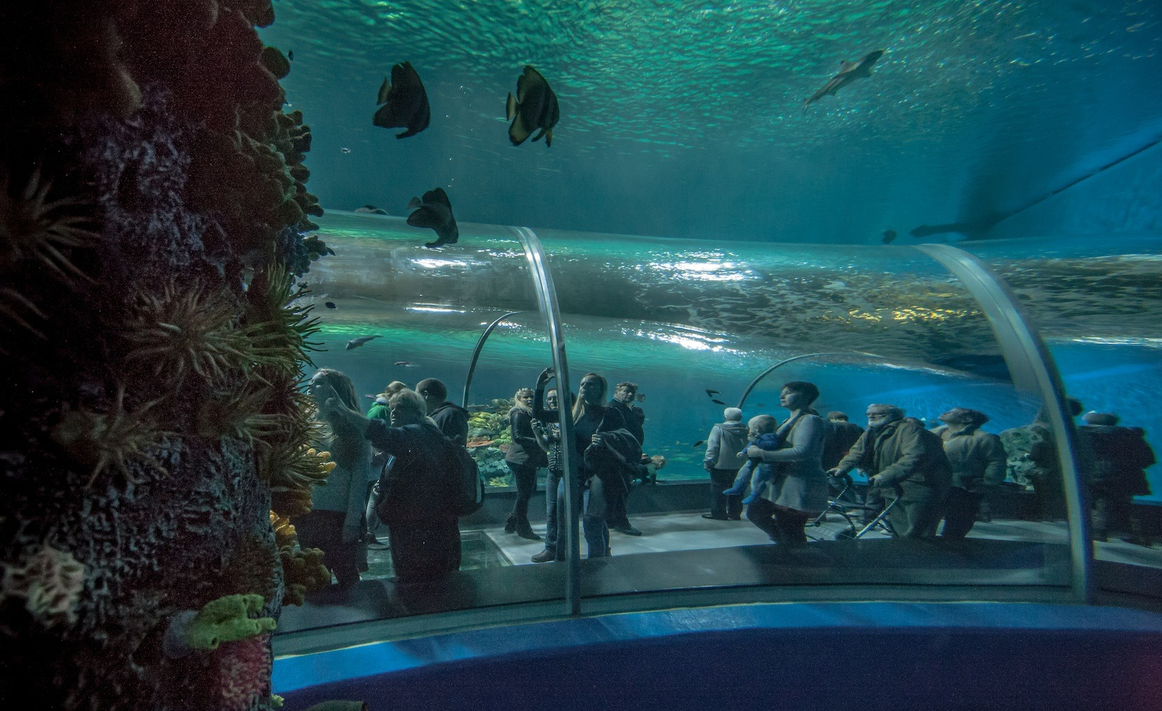 ... - The Blue Planet Public Aquarium Reef Coral and Exotic Fishes