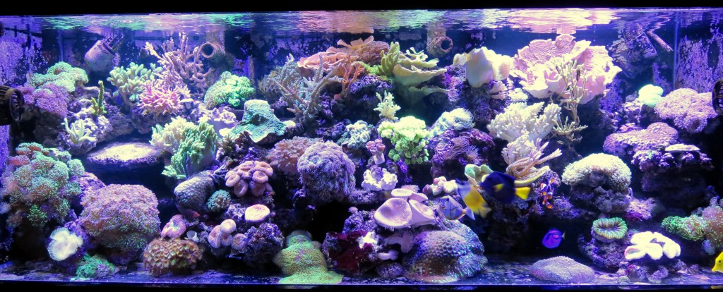 Pat _&_ Kelly _reef _Aquarium