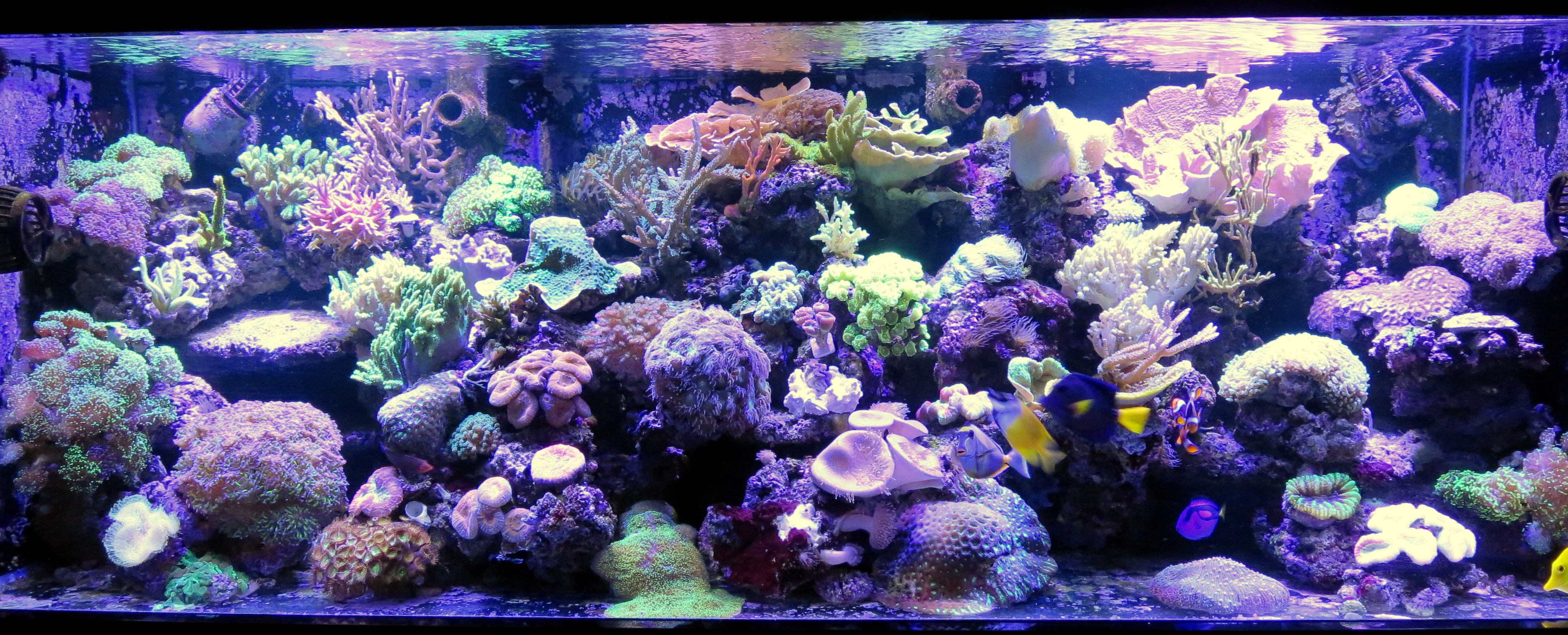 Beautiful 200 Gallon Mixed Reef Orphek