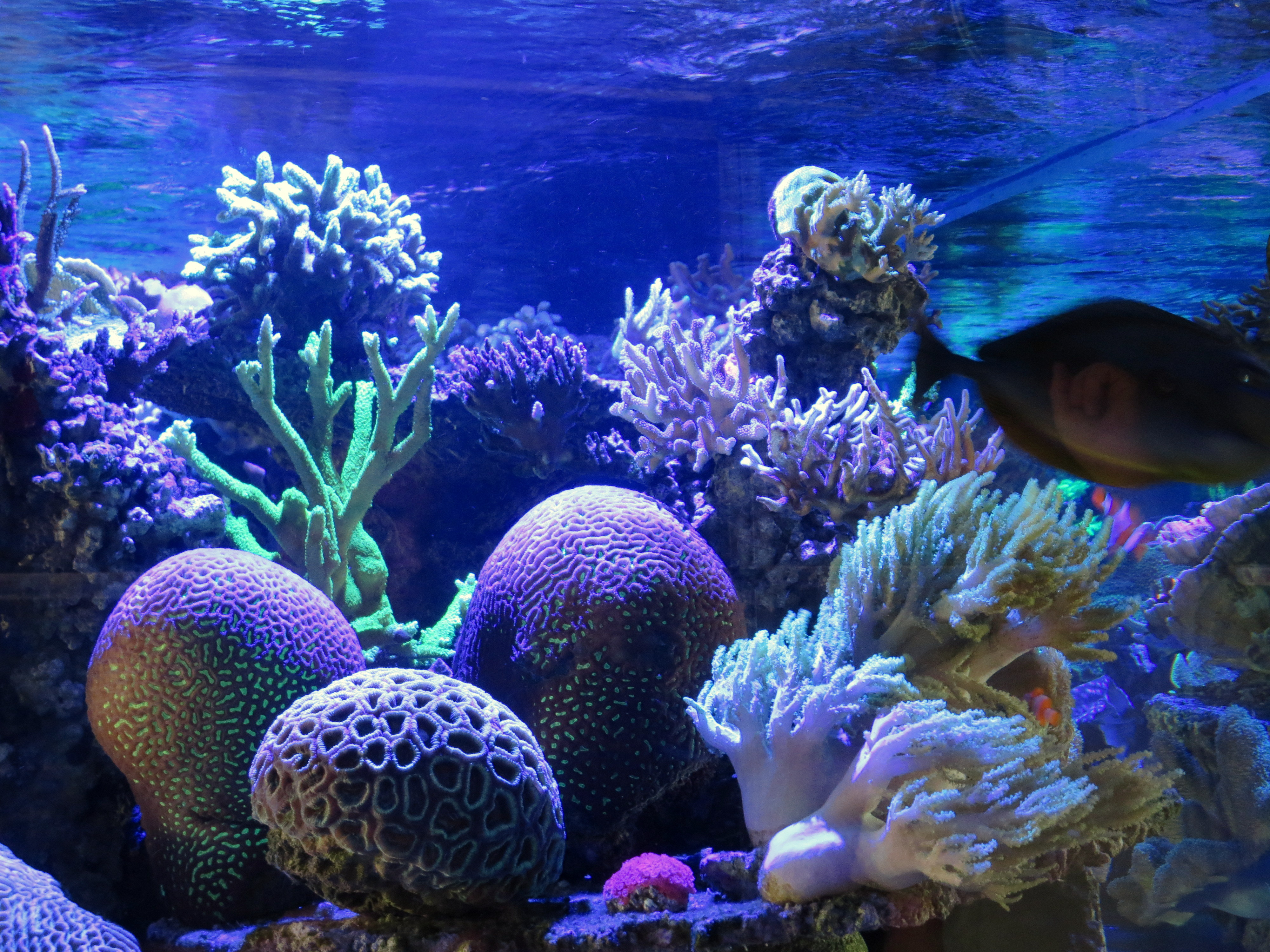 Open house at Reef Systems Coral Farm •Aquarium LED ...