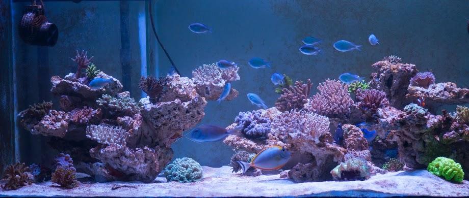 Terumbu-akuarium