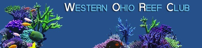 Batı Ohio Reef-Club-frag-takas
