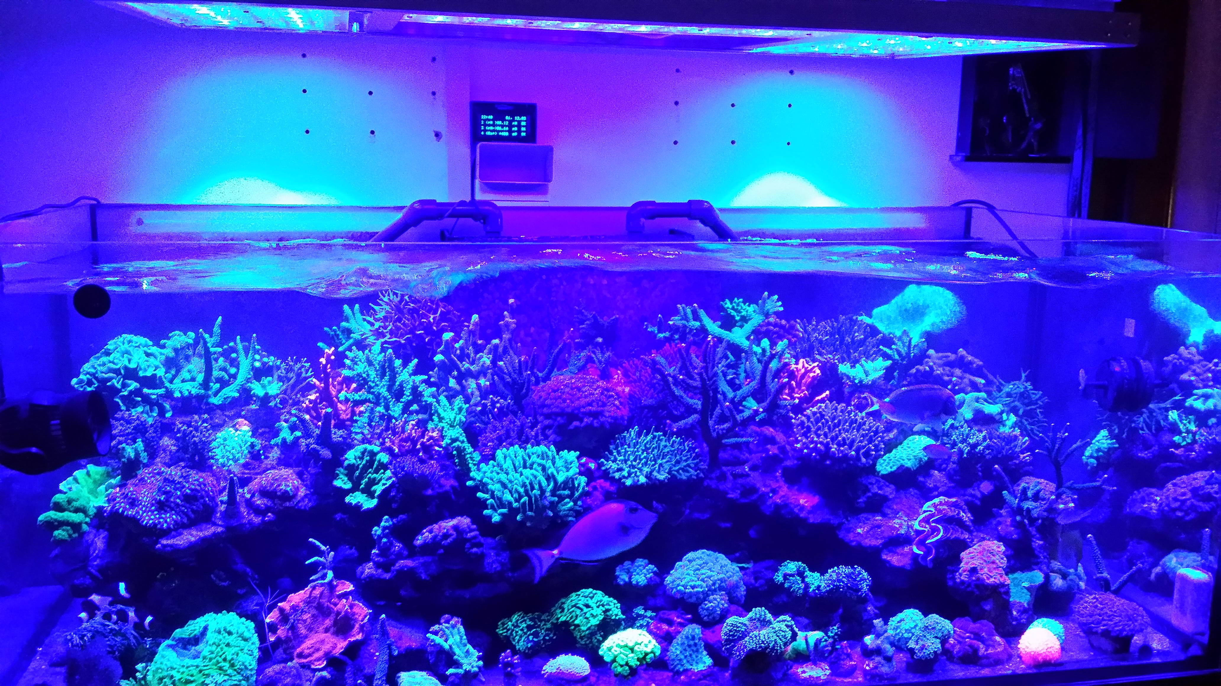 deze tank is echt een mooie aquarium led verlichting. Black Bedroom Furniture Sets. Home Design Ideas