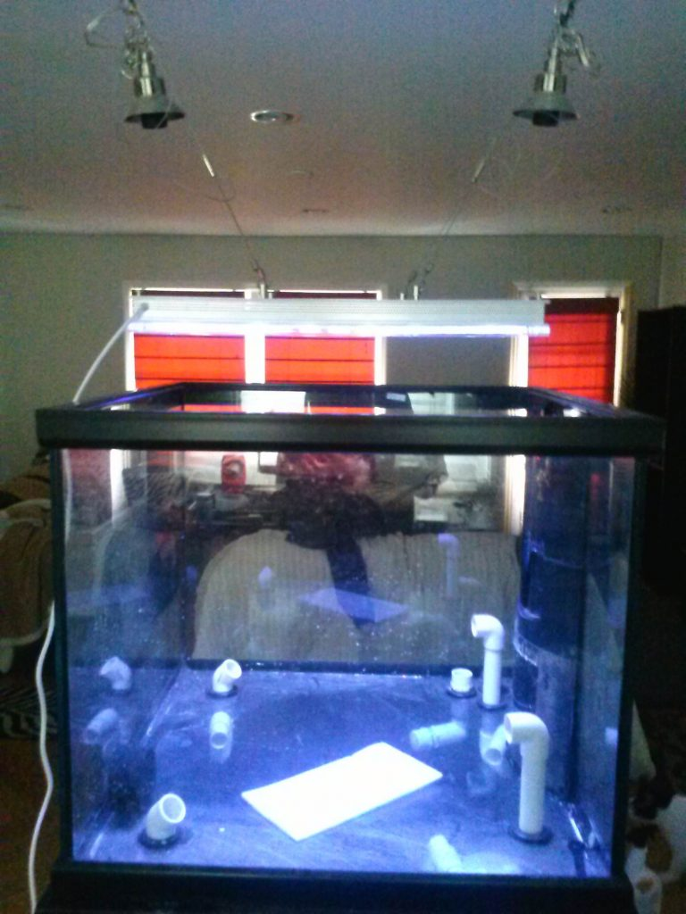 aquarium-avec-orphek-led-projecteur