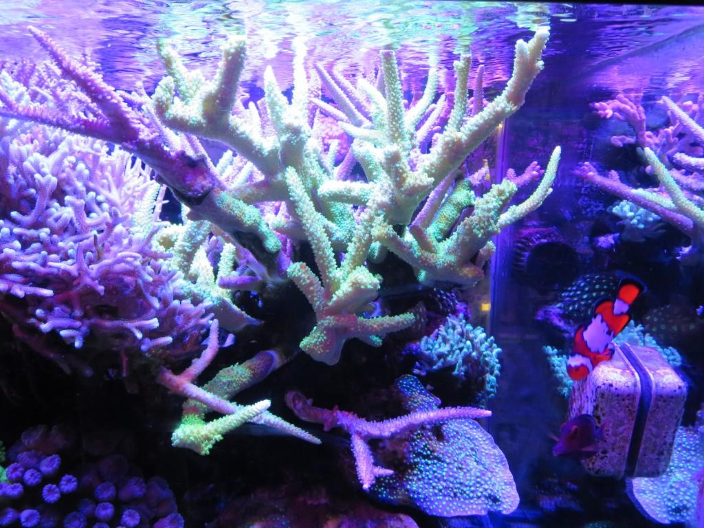 corals_under_leds