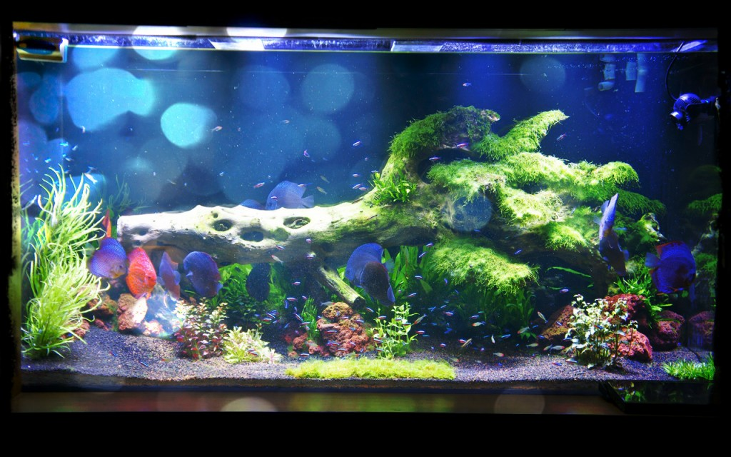 planted freshwater aquarium lighting orphek. Black Bedroom Furniture Sets. Home Design Ideas
